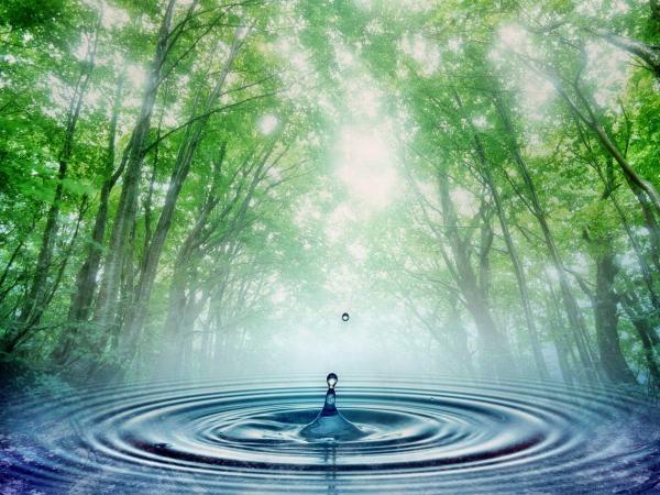 A Água E A Sua Importância