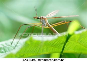 A Importância Dos Mosquitos Na Nossa Vida