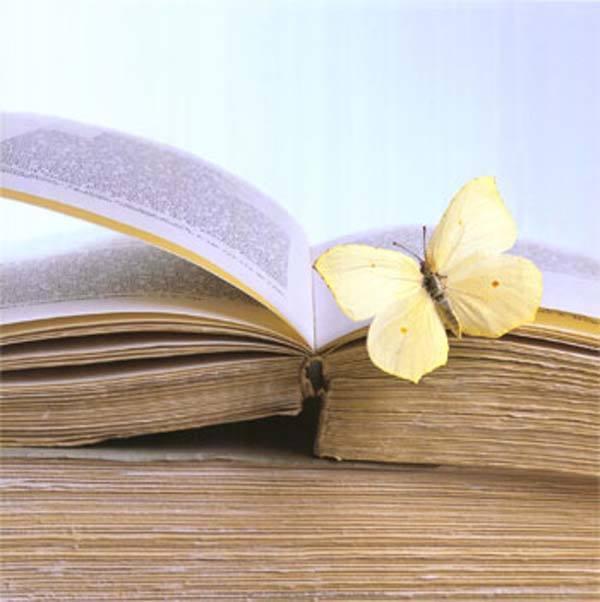 A magia que o livro Tem