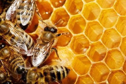 Abelha não só produz mel