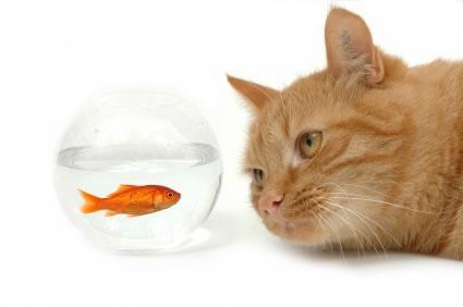 Afinal, devemos ter ou não um animal de estimação?
