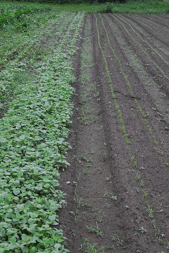 Agrotóxicos e outros produtos na lavoura: como aplicar com qualidade