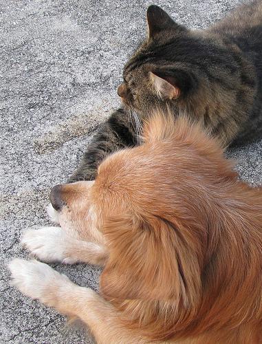 Alimentos perigosos para os cães e gatos