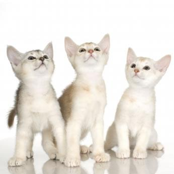 As doenças transmitidas pelo gato