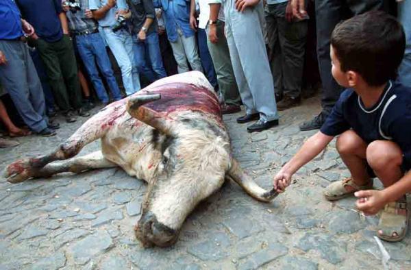 Barrancos - Os touros de morte