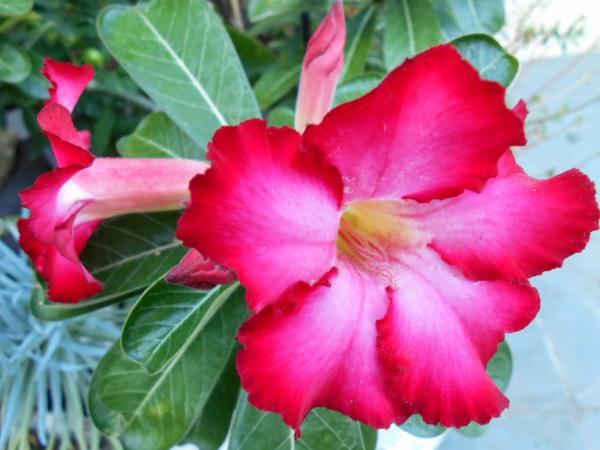 Beleza fatal - Flores que matam!