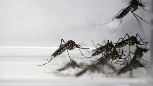 Brasil Tem 117 Municípios Em Situação De Risco - Dengue E Chikungunya