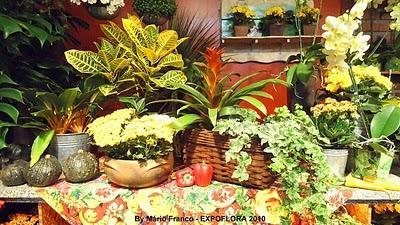 Como cuidar de Plantas de interior