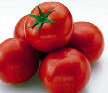 Como Fertilizar o Tomate