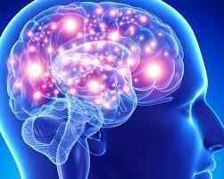 Como O Cérebro Trabalha Diante De Situações Do Dia A Dia