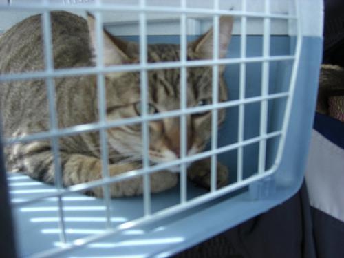 Como transportar animais domésticos em viagens aéreas