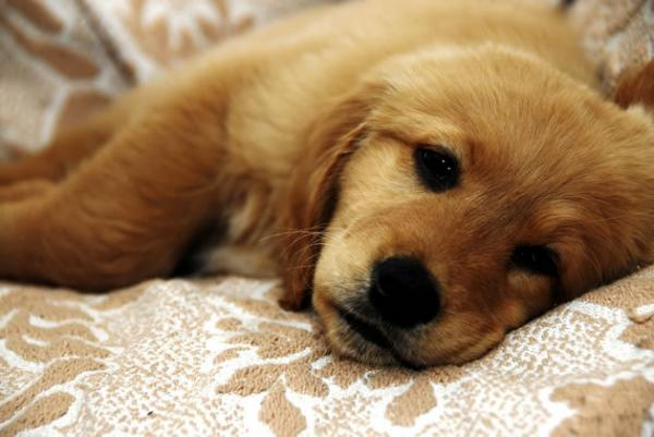 Como Tratar Do Seu Cão