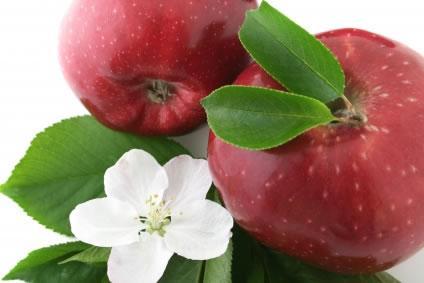 Conheça um pouco sobre a flor e frutos