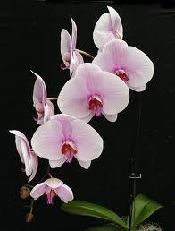 Cuidar das orquídeas Parte 2