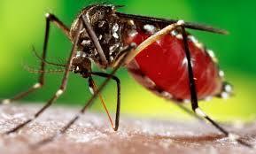 Dengue casos multiplicam em 2015.Saiba mais sobre essa doença, seus sintomas e como prevenir