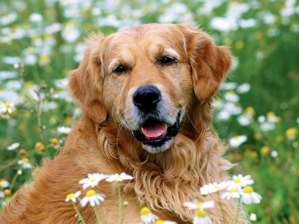 Dicas para impedir que seu cão fuja
