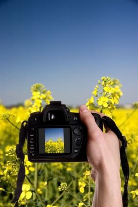 Dicas para tirar fotografias