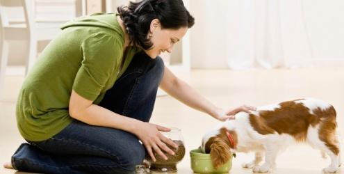 Dieta saudável para cães