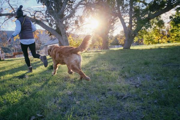 E agora: Caso ou compro um cachorro?