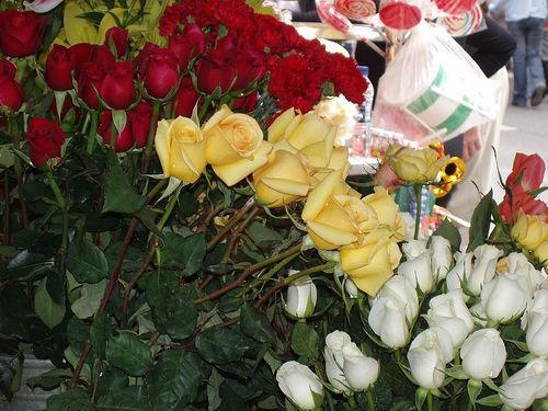 Flores para todas as ocasiões