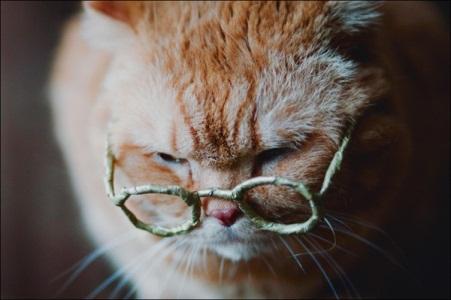 Gatos Idosos – Cuidados e Como alimentar