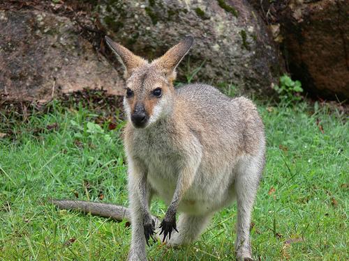 Instale-se no habitat de várias espécies em perigo na Austrália
