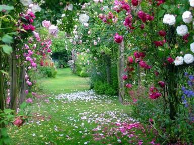 Jardim de Rosas - Crie o seu!