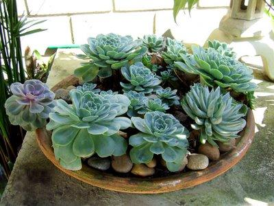 Jardinagem Fonte de Vida