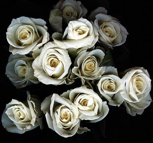Jarros e rosas brancas