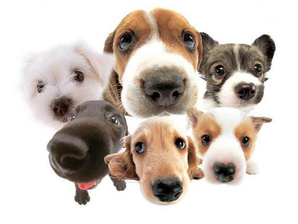 O Adestramento De Cães Para Obediência