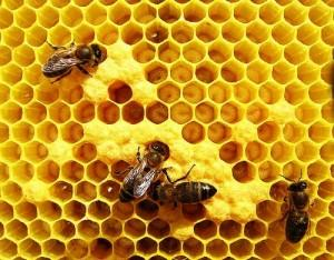 O papel das abelhas