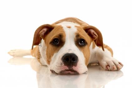O seu cão tem mau hálito