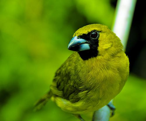 Pássaros – Perceba sua beleza