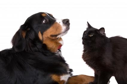 O amor dos animais