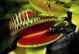 Plantas Carnívoras - Fascinante!