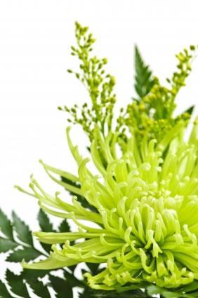 Plantas medicinais que não devem faltar em casa