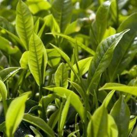 Saiba sobre a importancia das plantas