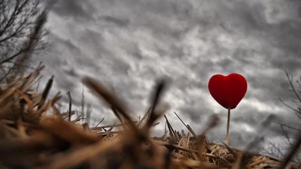 Sobre amores e dores