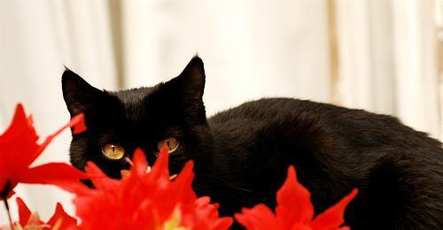 Sua Majestade... O gato!