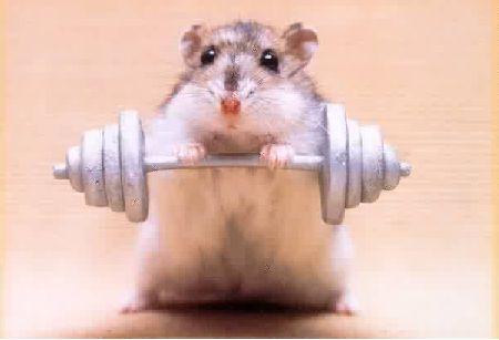 Tenho um hamster! E agora?