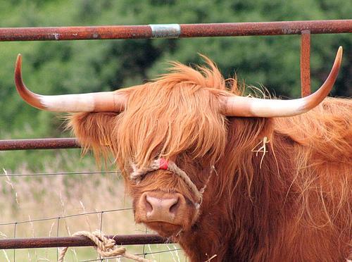 Tração animal: ferramenta alternativa para o produtor