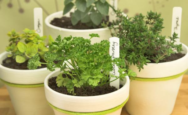 Veja como cultivar hortaliças e temperos na sua casa