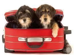 Viajar com o Animal de Estimação