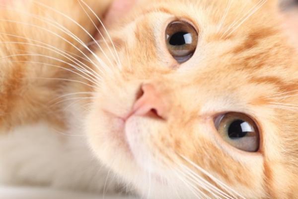 10 dicas incríveis para cuidar de gatos filhotes e adultos