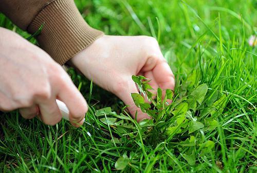 5 Maneiras De Combater Naturalmente As Ervas Daninas Do Seu Jardim