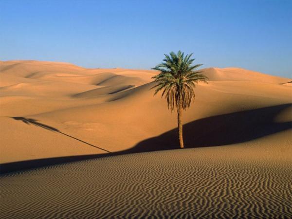 A vida nos desertos