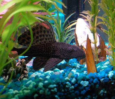 Aquário de peixes de água quente: cuidados a ter