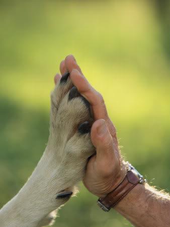 Cães e Humanos: Amizade por interesses