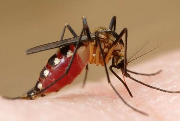 CHIKUNGUYA, Doença Que Tem Os Mesmos Sintomas Da Dengue.