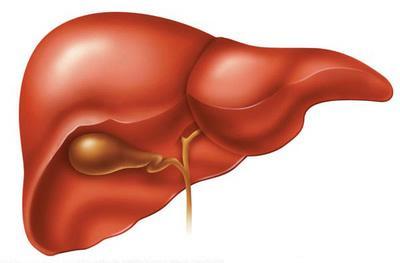 Como desintoxica o fígado?